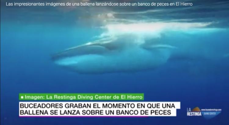 BUCEO LA RESTINGA EN LOS MEDIOS (LA SEXTA) Vídeo ballena comiendo