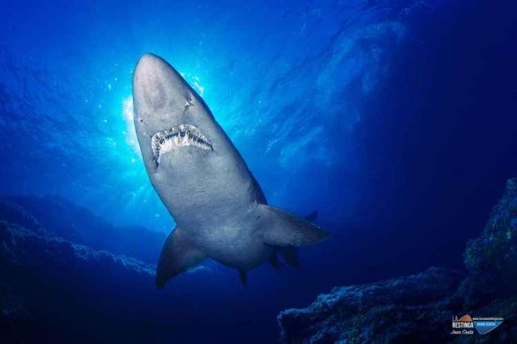 ESPECIAL - SHARK SOLRAYO'S WEEK