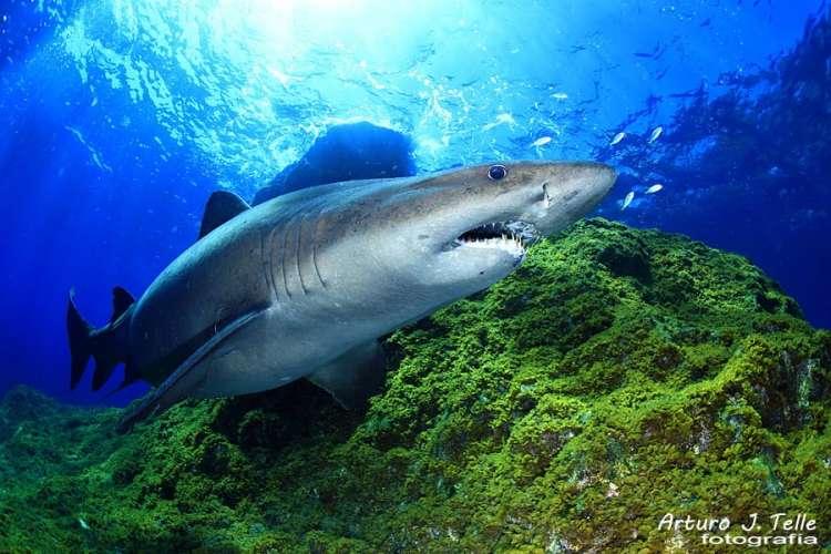 ¡SHARK SOLRAYO'S WEEK!
