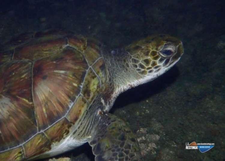 16 de Junio - día internacional de las tortugas Marinas
